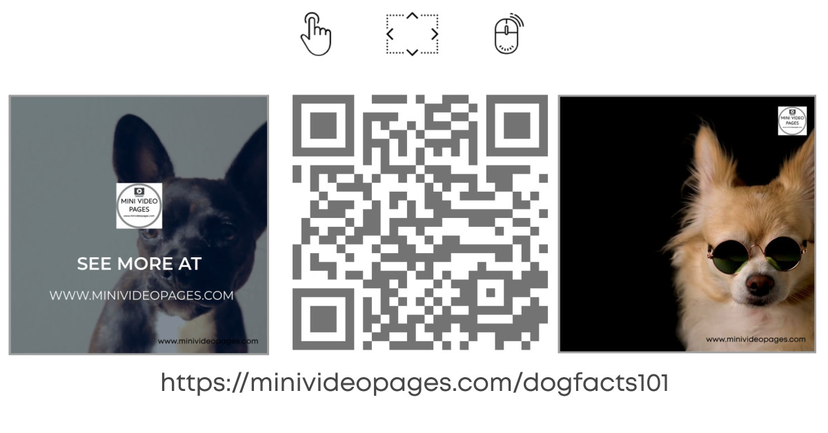 image Mini Video Pages Dog Facts 101 Link