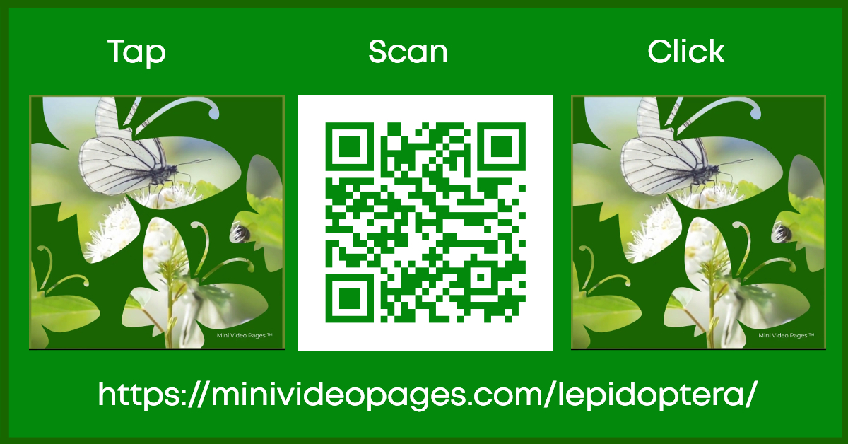 Mini Video Pages Lepidoptera Link Image